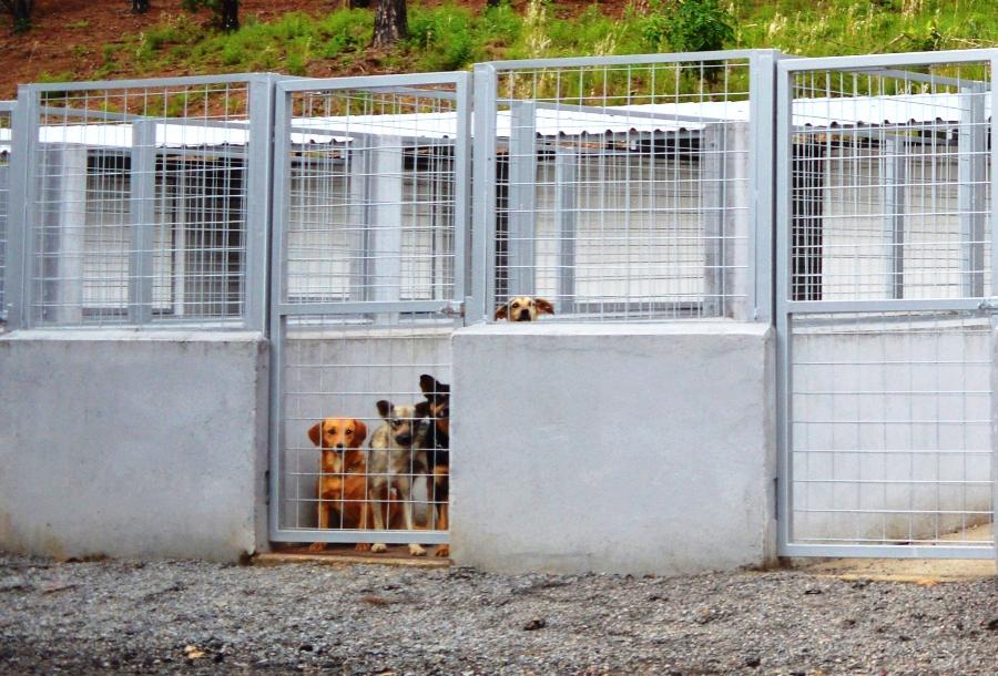 Abrigo conta com 10 baias e já atende a 50 cães